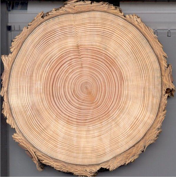 Šumné drevo